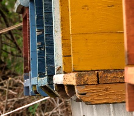 Il miracolo combinato: storie di api e dei loro custodi
